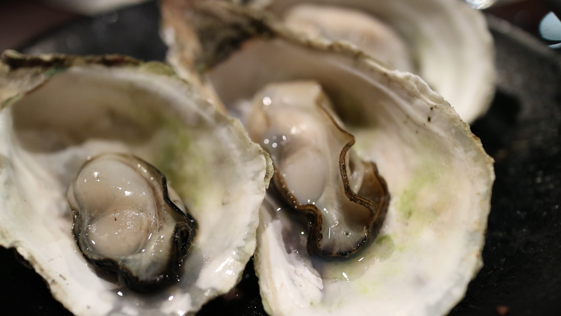 oyster, shellfish, zinc